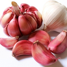 Garlic – Allium sativa